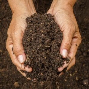 Maintaining soil health is essential to your summer landscaping here in Ashburn, VA.
