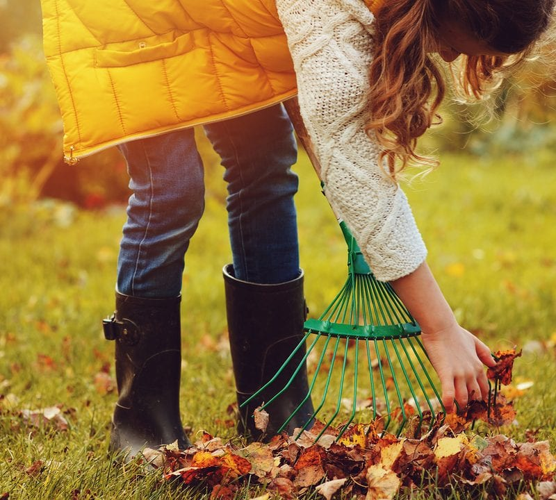 Prepare for keeping your yard clean in the fall ahead of time.