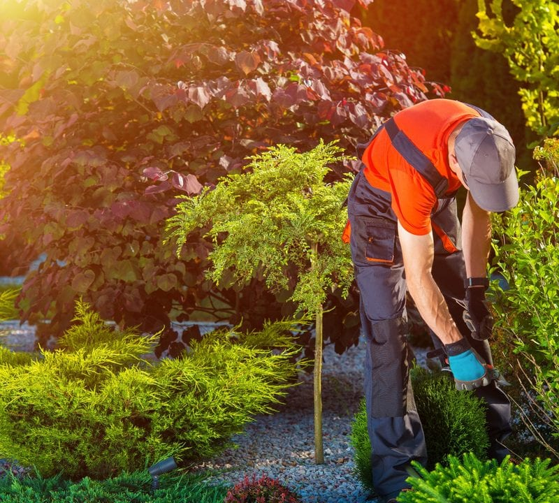 A professional landscaping team has many benefits for your Great Falls, VA landscaping.