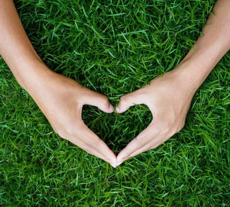 hand shaped as a heart in lush green grass